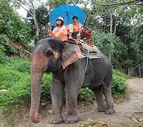 Camp Chang Kalim Elephant Trekking Patong Beach