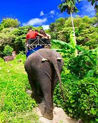 Camp Chang Kalim Elephant Riding Patong Beach