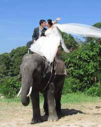 Camp Chang Kalim Elephant Pre Wedding Patong Beach